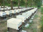 大自然養蜂場